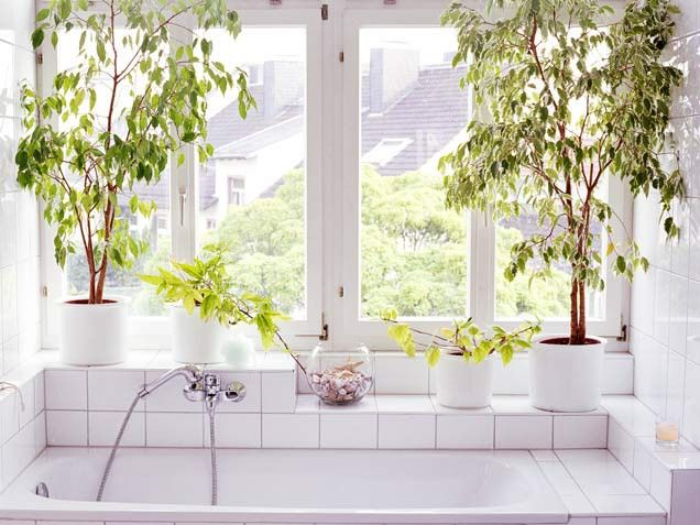 salle de bain vs plantes jardiner en ville. Black Bedroom Furniture Sets. Home Design Ideas