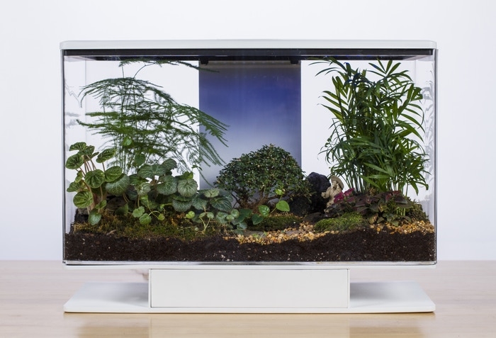 terrarium, verdure, jungle tropicale, smart terra